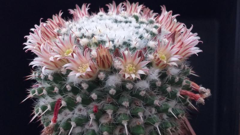 Cactus under carbonate. 19. M_neja14