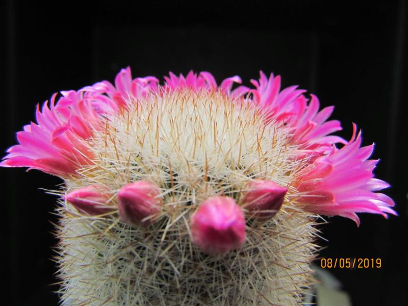 Cactus under carbonate. 19. M_pilc10