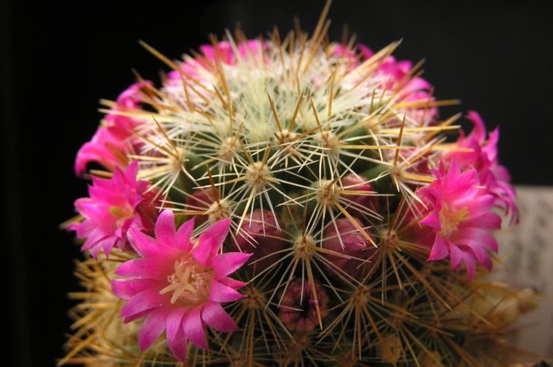 Cactus under carbonate. 19. M_reko10