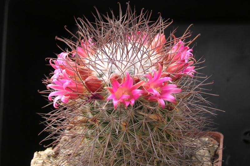 Cactus under carbonate. 19. M_reko11
