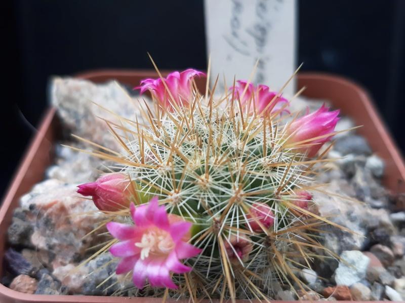Cactus under carbonate. 19. M_reko12