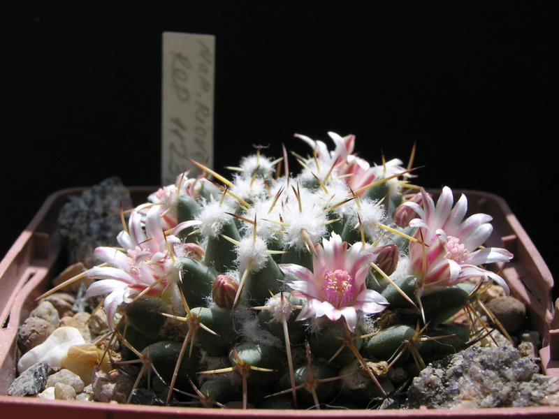 Cactus under carbonate. 17. Started! M_riov10