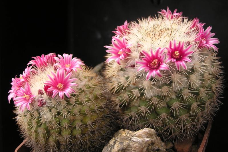 Cactus under carbonate. 19. M_tayl10
