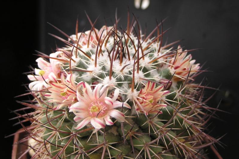 Cactus under carbonate. 19. M_wagn10