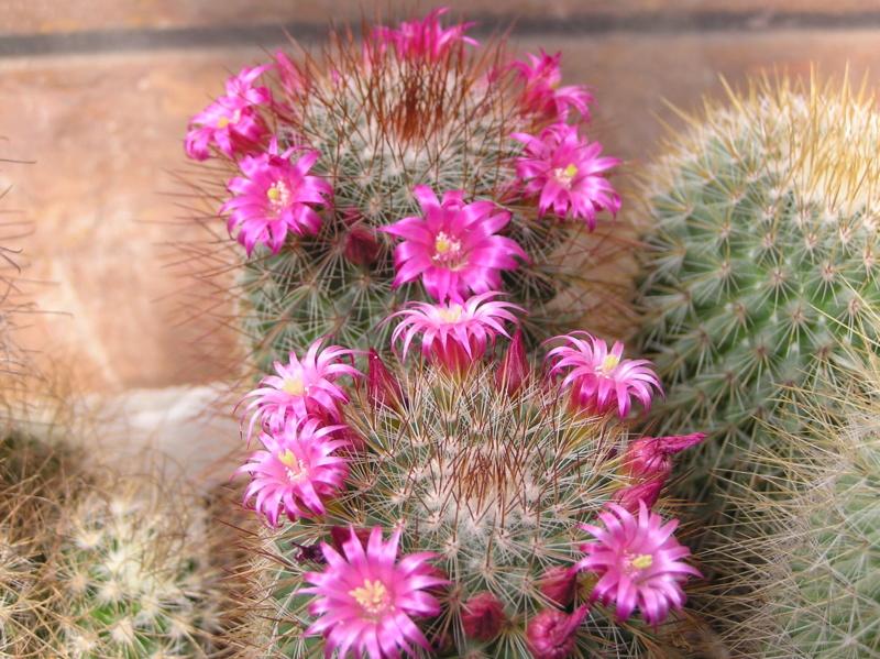 Cactus under carbonate. 19. Mam_sp10