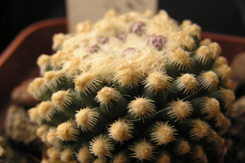 Cactus under carbonate. 18. P1010012