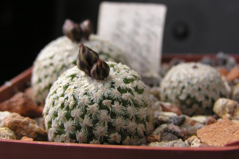 Cactus under carbonate. 18. P1010013