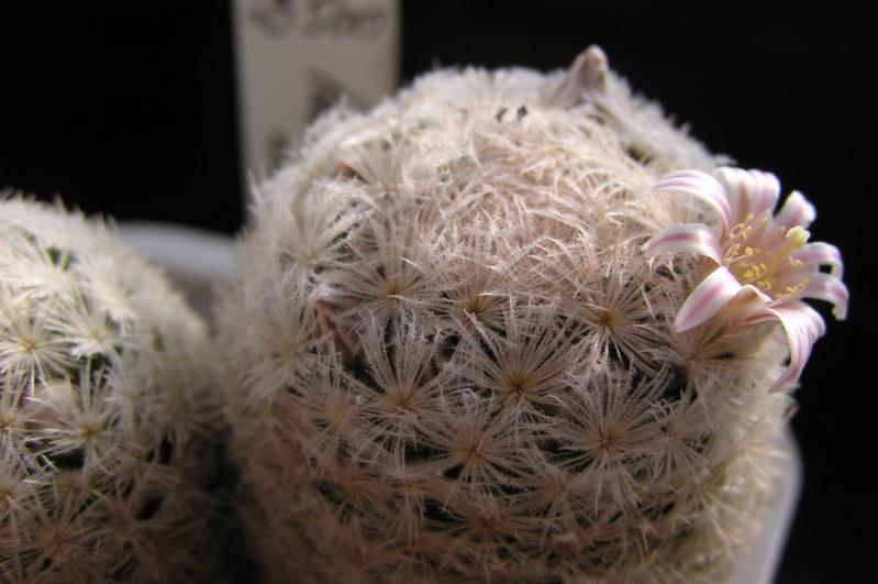 Cactus under carbonate. 20. P1010028