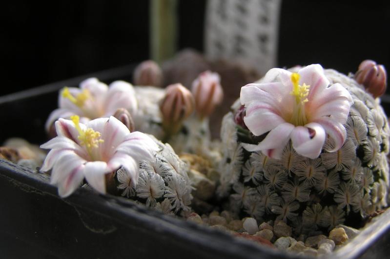 Cactus under carbonate. 20. P1010029