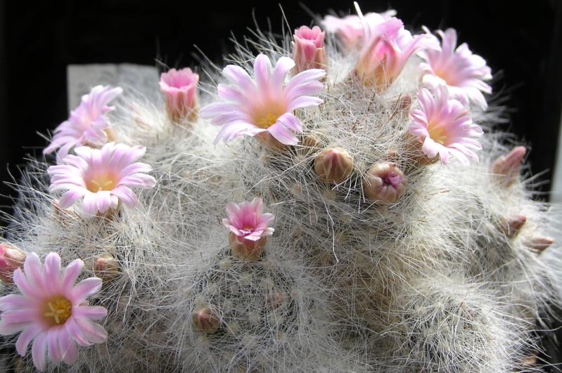 Cactus under carbonate. 20. P1010034