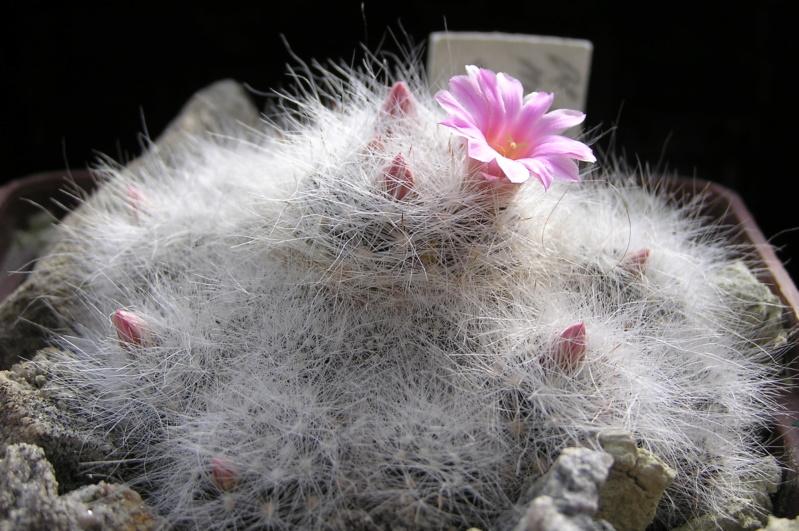 Cactus under carbonate. 20. P1010035