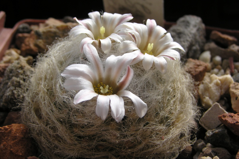 Cactus under carbonate. 20. P1010037