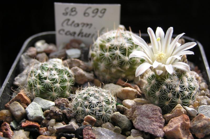 Cactus under carbonate. 20. P1010038