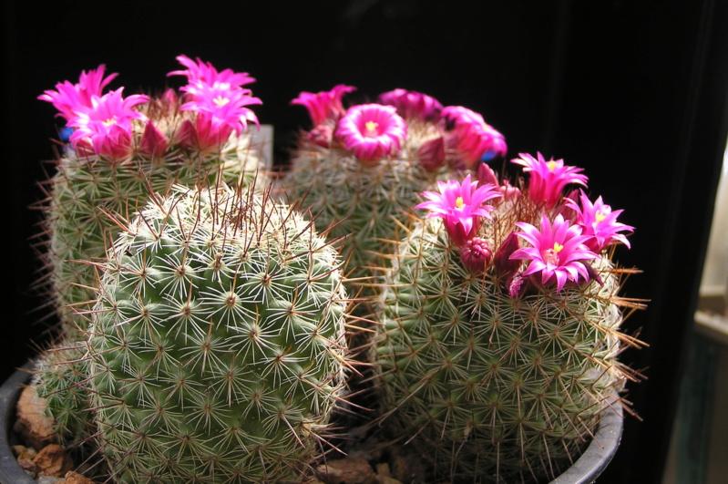 Cactus under carbonate. 20. P1010039