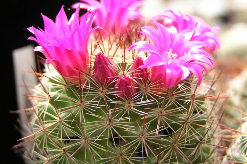 Cactus under carbonate. 20. P1010040