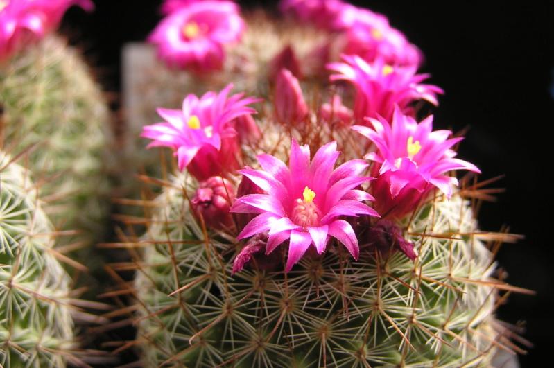 Cactus under carbonate. 20. P1010041