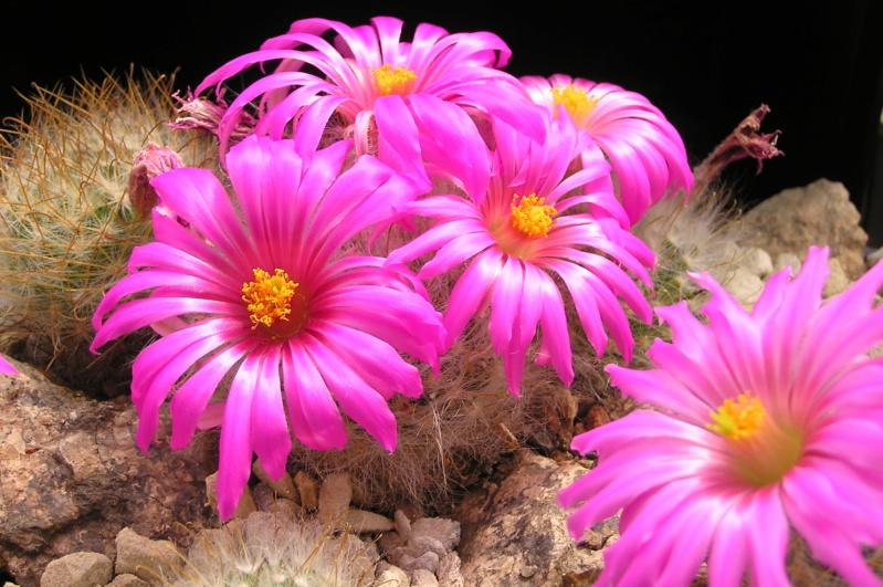 Cactus under carbonate. 20. P1010042