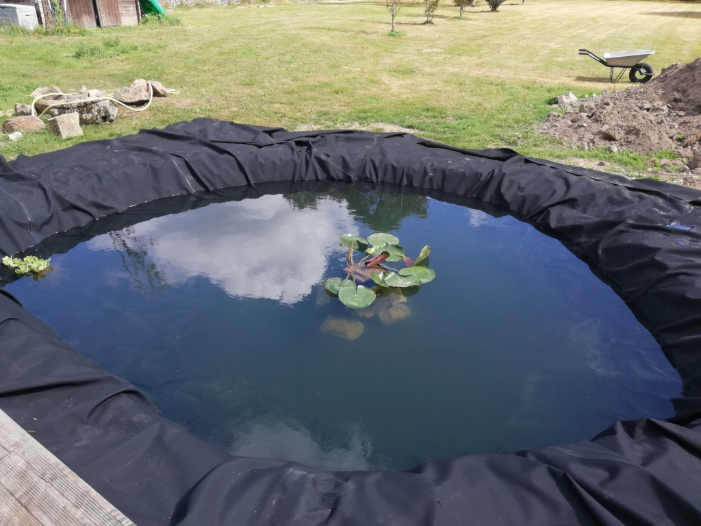 Projet de bassin Img_2020