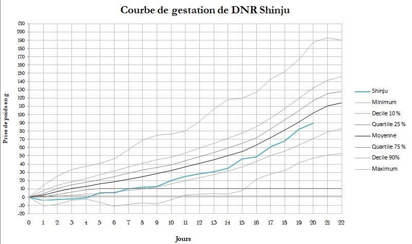 IND Ausländer x DNR Shinju Semain11