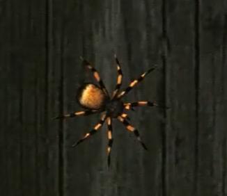 Animales y Insectos Ultra HD Screen33
