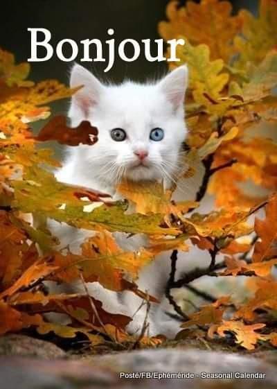 Dimanche 4 octobre Fb_i1668