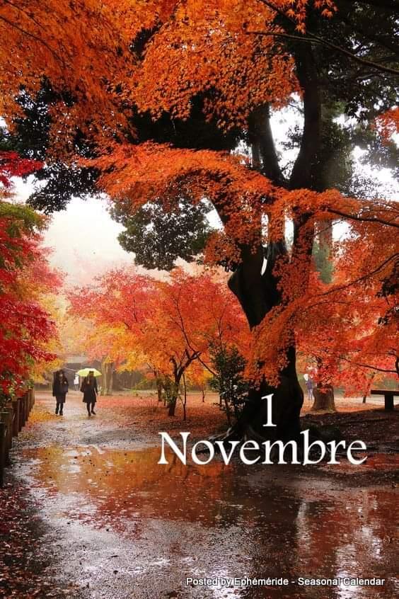 Vendredi  1er novembre  Fb_im313