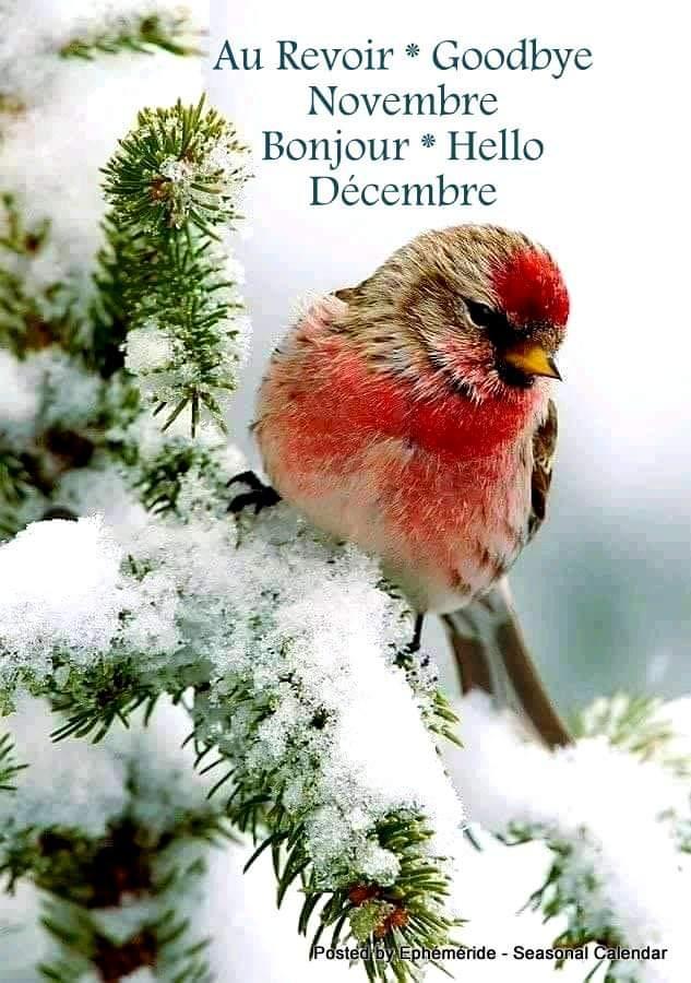 Dimanche  1er décembre  Fb_im435
