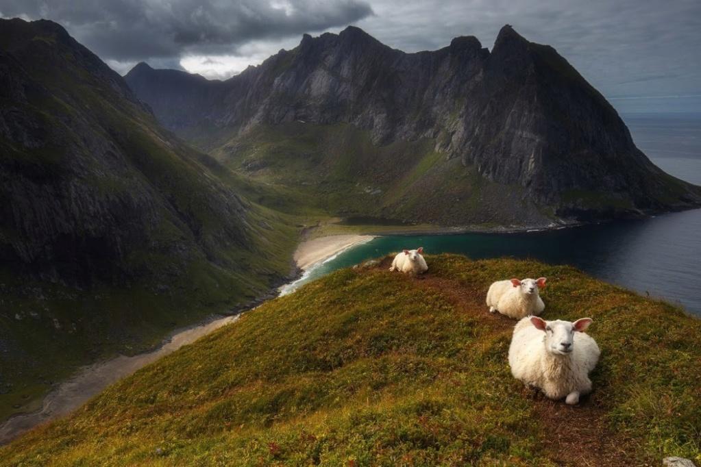 Роскошные пейзажи Норвегии - Страница 23 14749910