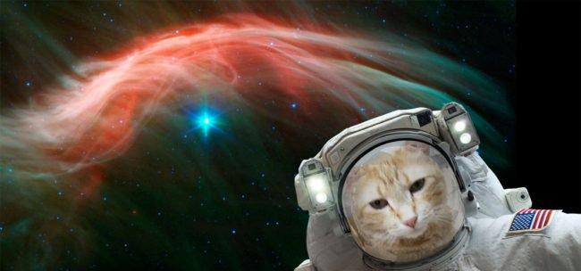 Звёздное небо и космос в картинках - Страница 31 Cat-e110