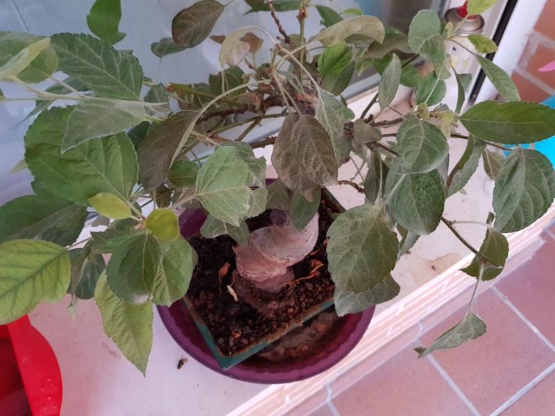 Arañitas en manzano 20180711