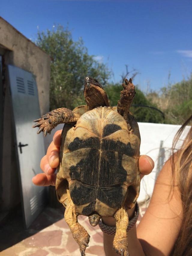 Aide à l'identification de mes 2 tortues 33254d10