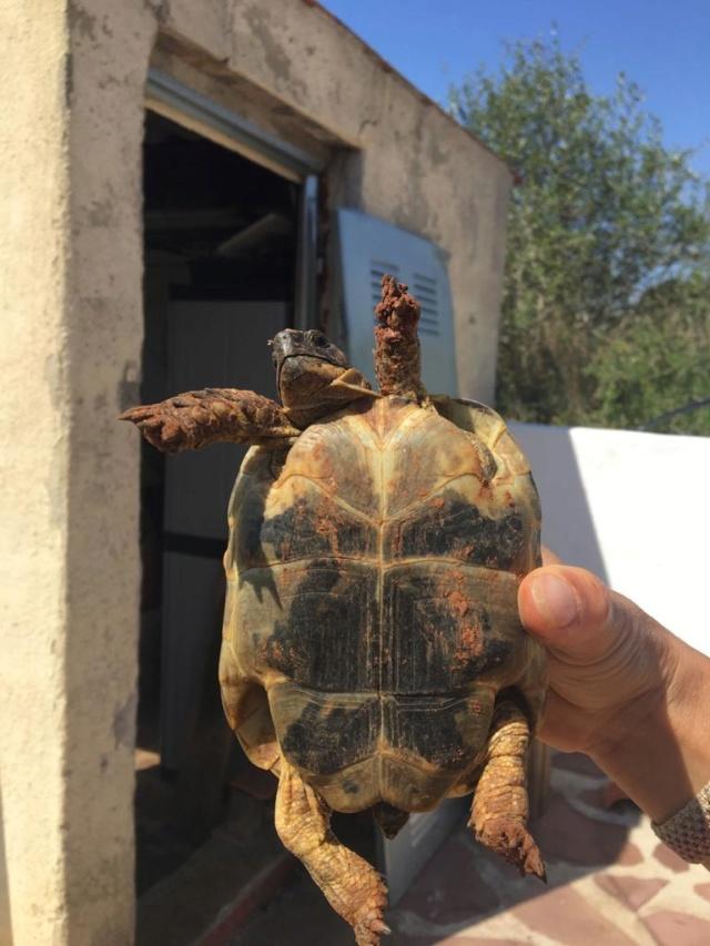 Aide à l'identification de mes 2 tortues 92d33110