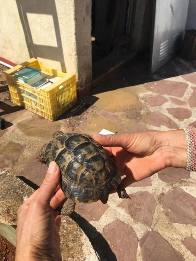 Aide à l'identification de mes 2 tortues Ed717410