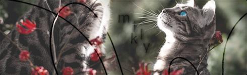 Don't shoot the messenger[Plot]  Milkyp11