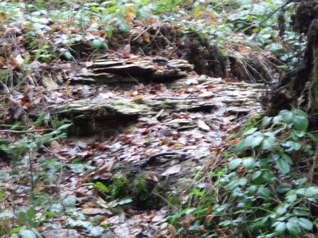 SPOT plateau de CITA zone 1 Dscf1012