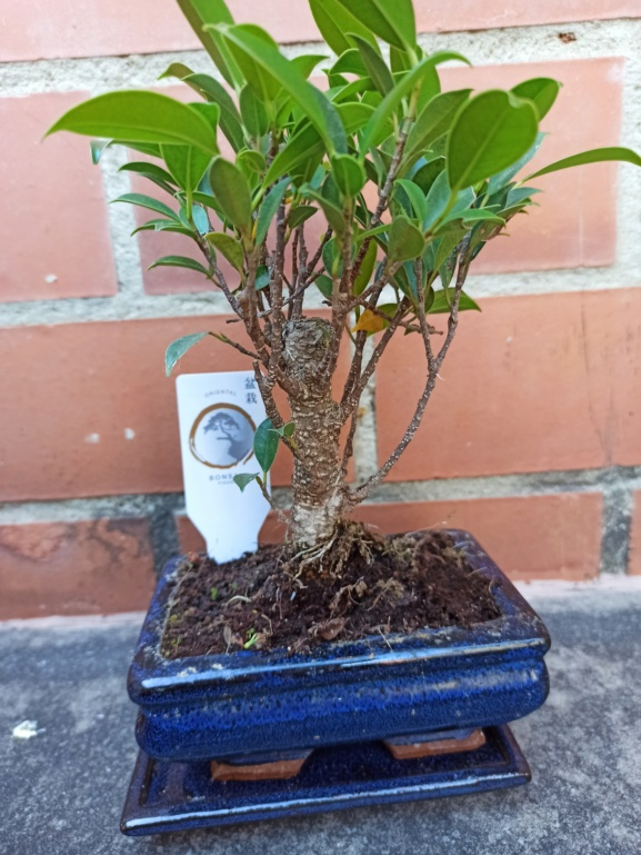 Ficus de prácticas Img_2036