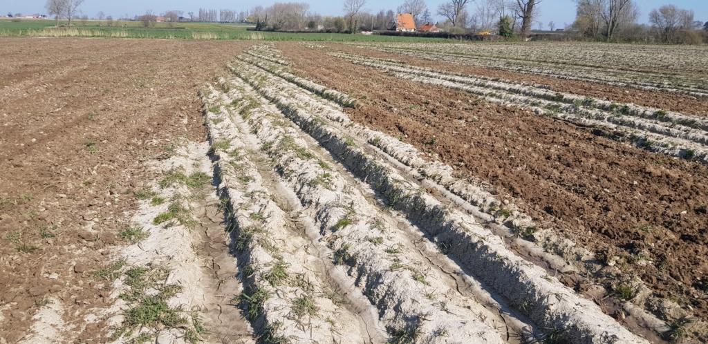 Fertilisation des blés de printemps 20200315