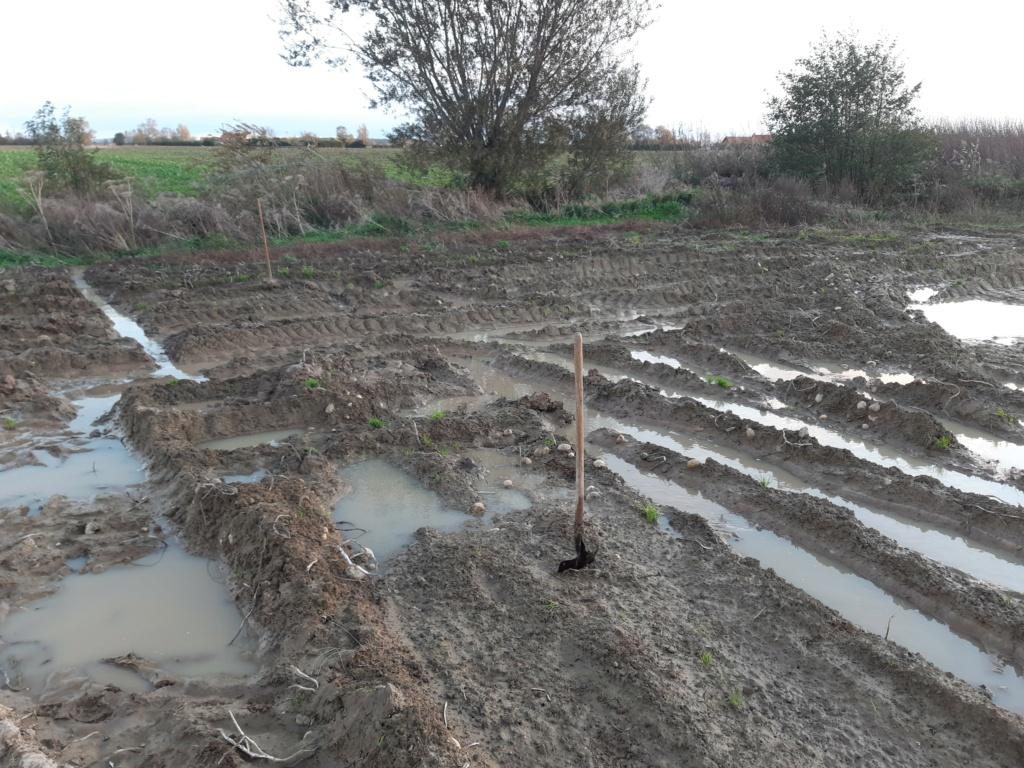 Restructurer et semer une terre après une récolte en conditions désastreuses... Img_2012
