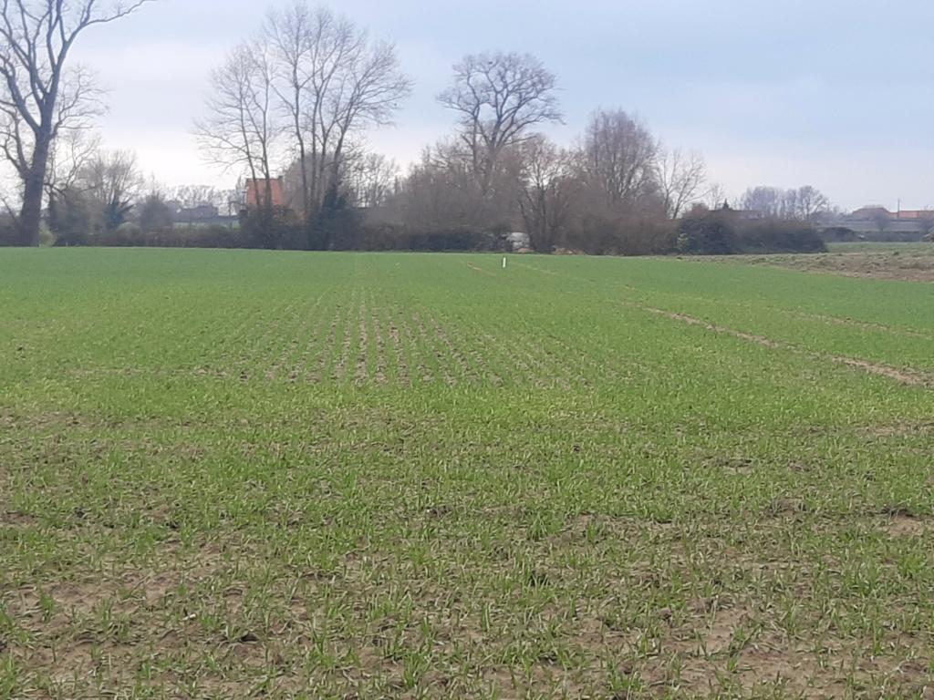 suivi blé 2021 Img_2018