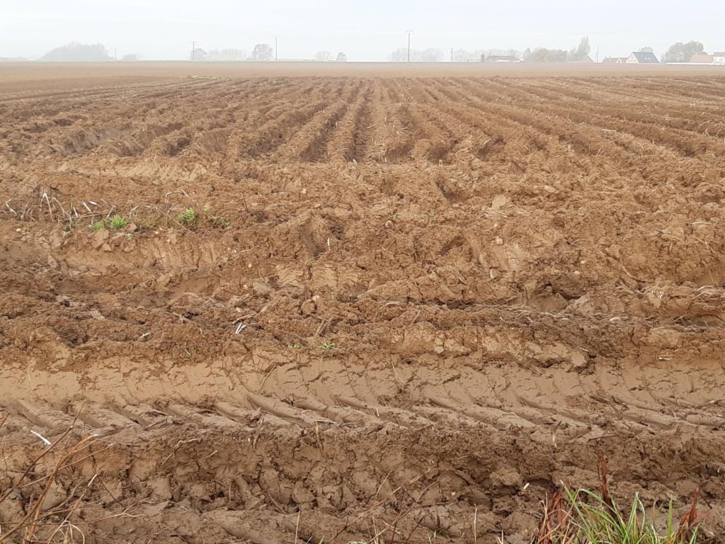 Emblaver du maïs après une récolte d'automne très compliquée, labourer ou décompacter ?? - Page 2 Img_2020