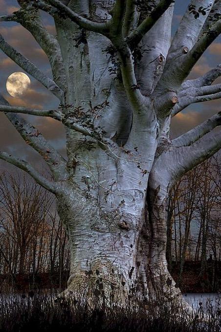 bonzour bonne zournée et bonne nuit notre ti nid za nous - Page 37 Captur17