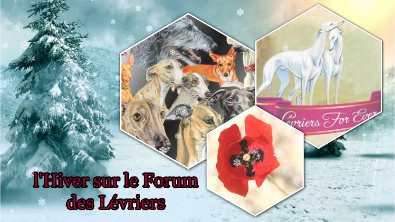 LÉVRIERS-forever.