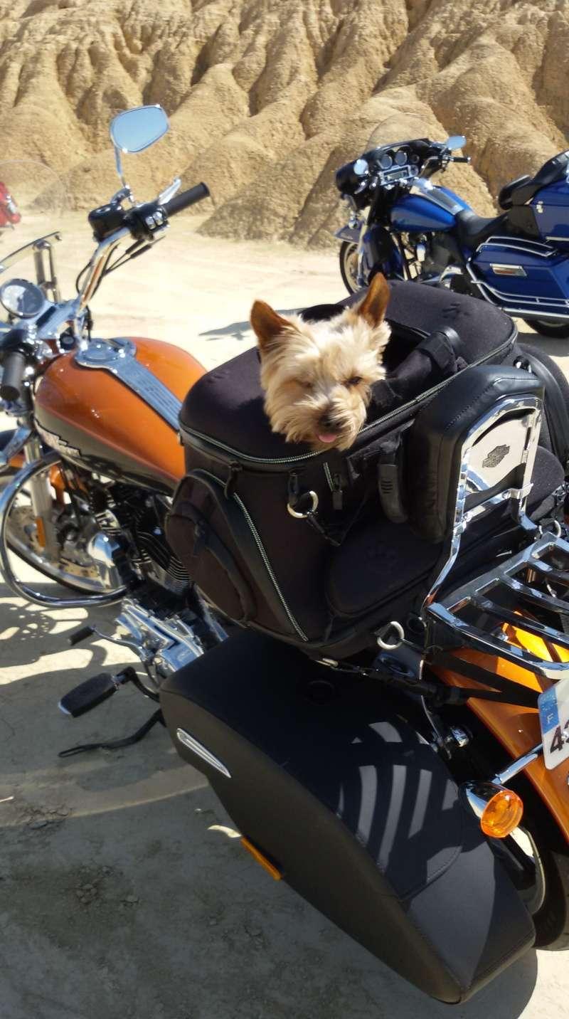 Sacoche pour chien pour sportster 20150510