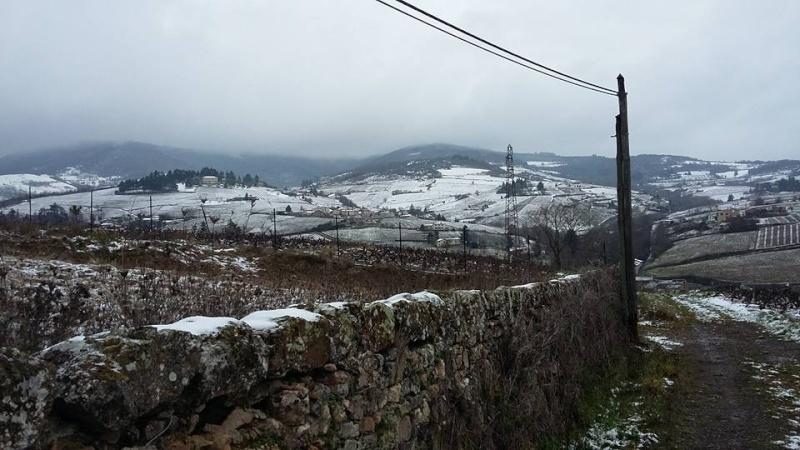 Le Beaujolais Blanc.. - 17/01 12508710