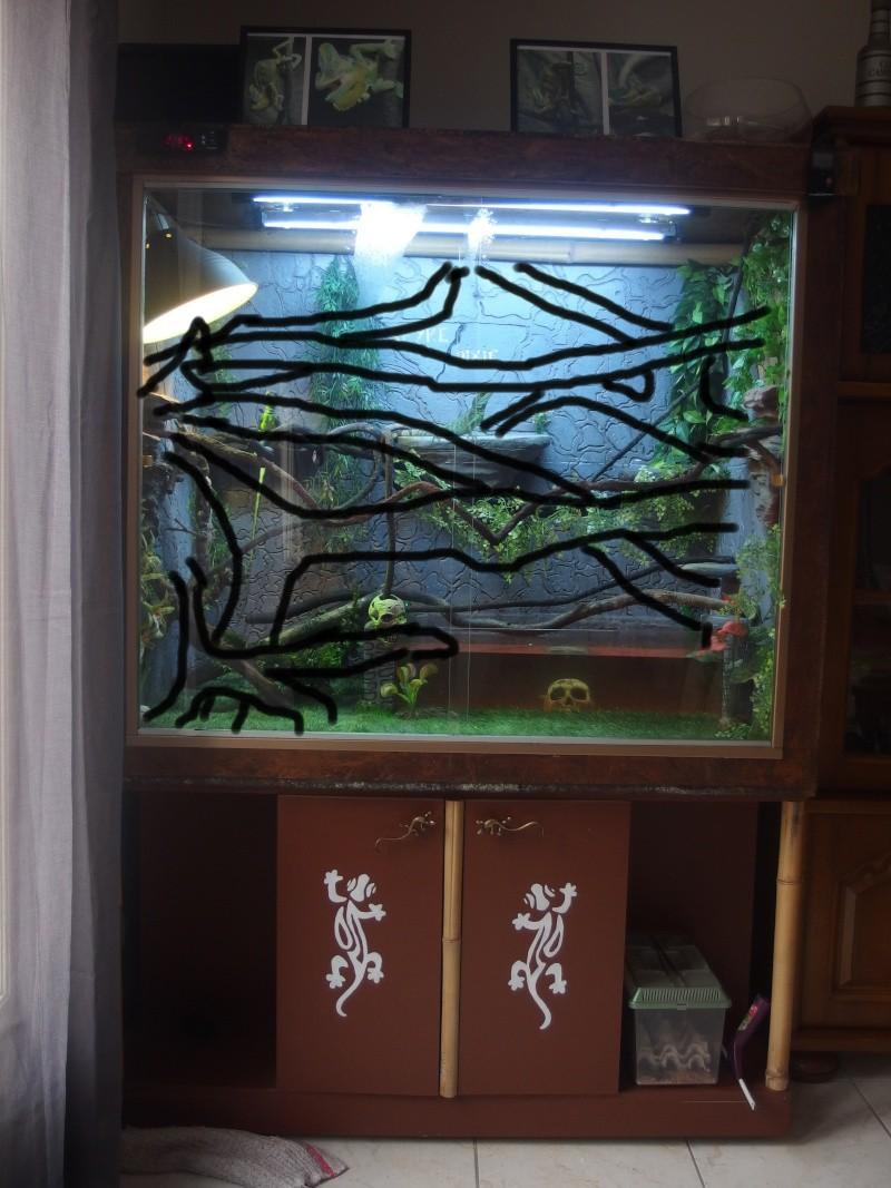 amenagement terrarium dragon d'eau  Pb190311