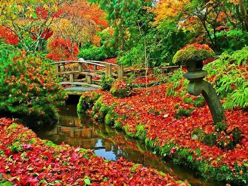 Images d'automne  - Page 2 14591710