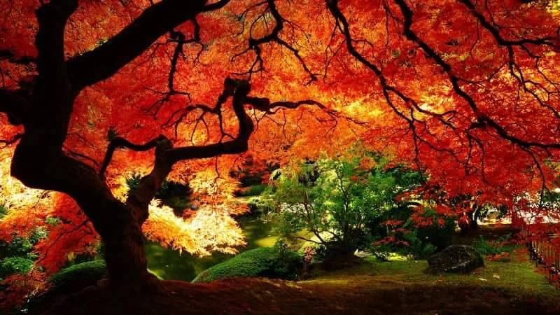 Images d'automne  - Page 7 14591810