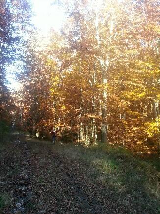 Images d'automne  - Page 5 15079010