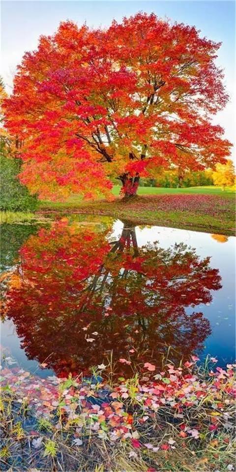 Images d'automne  - Page 7 21617510