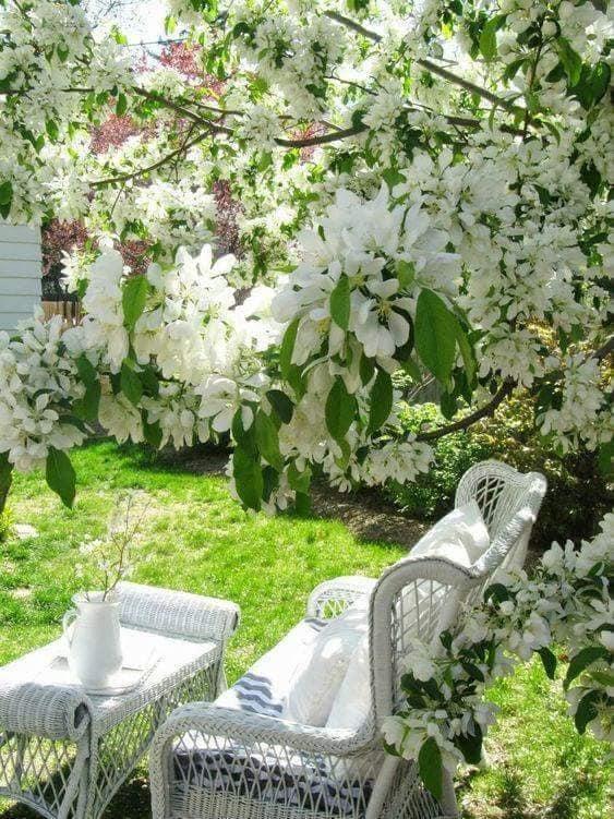 Photos de printemps/été - Page 14 38041913